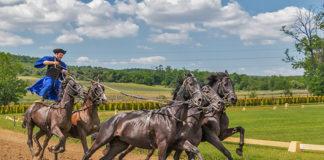 Co powinna zawierać pełnowartościowa pasza dla koni?