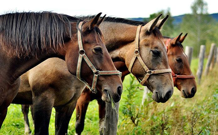 Witaminy i suplementy dla koni – sprawdź na co warto postawić